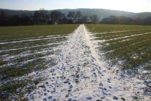 Snow Wonders   News   The Natural Navigator